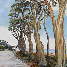 Stand of Eucalyptus Trees, La Sleva Beach